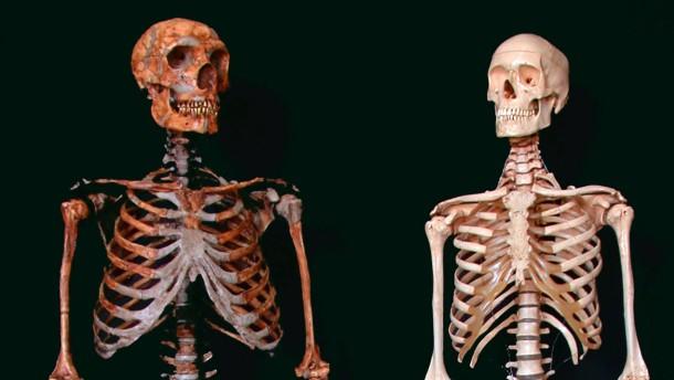 Körpermasse ließ kaum Hirnkapazität für Soziales