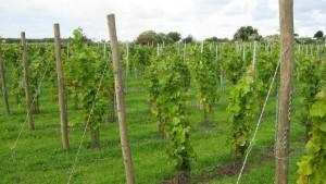 """""""Der Klimawandel hilft dem Weinbau"""""""