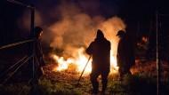 Winzer verbrennen am Donnerstag in den frühen Morgenstunden in einem Weinberg bei Meißen in Sachsen Stroh, um die Weinreben gegen den Frost zu schützen.
