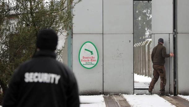 In Mecklenburg-Vorpommern werden 106.000 Hennen getötet