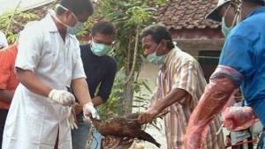 37. Vogelgrippe-Tote in Indonesien