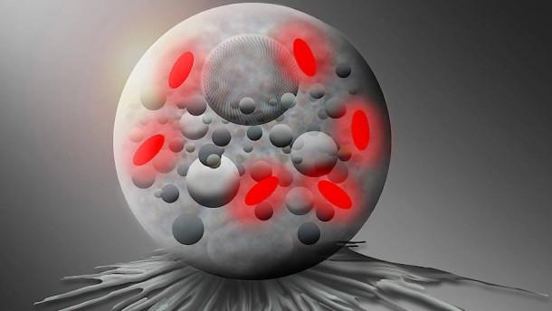 """Forscher benennen neue Bakterien-Gattung nach """"Pokémon""""-Spiel"""