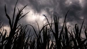Trotz Unwetter kein Ende der Hitzewelle in Sicht