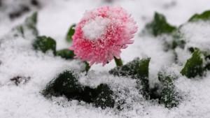 Der Frühling beginnt winterlich