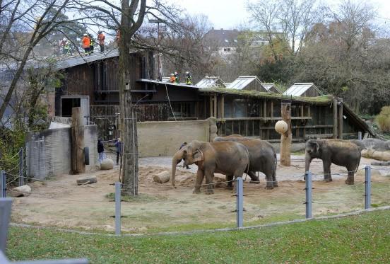 karlsruhe zahlreiche tiere sterben bei brand im zoo. Black Bedroom Furniture Sets. Home Design Ideas