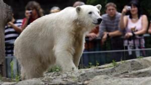 Neumünster kämpft um Knuts Kohle