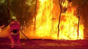 Buschfeuer verwüsten riesige Flächen in Zentral-Australien