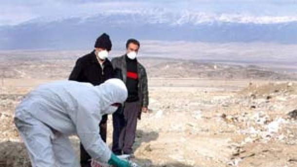 Vogelgrippe breitet sich nach Westen aus