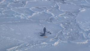 Teenager überlebt auf Eisscholle neben Bären