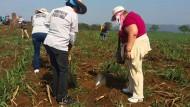 Mitglieder des Suchtrupps am Dienstag auf einem Feld in Veracruz. Zwei Tage später machten sie einen grausigen Fund.