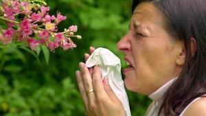 Das Allergie-Desaster