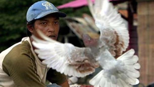 Indonesien bittet um Hilfe im Kampf gegen die Vogelgrippe