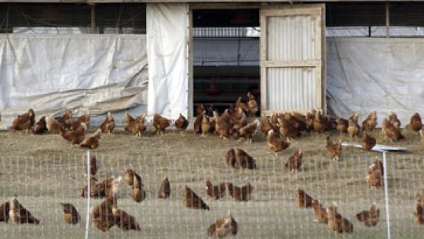 EU verhängt Importverbot für amerikanisches Geflügel