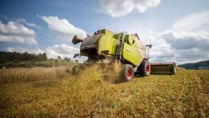 Bauernverband rechnet mit enttäuschender Ernte