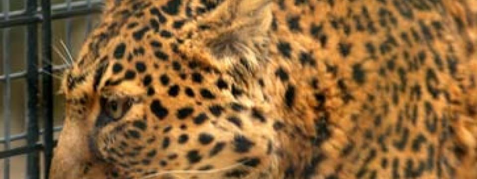 Unfall Tragdie im Chemnitzer Tierpark Tierpflegerin von