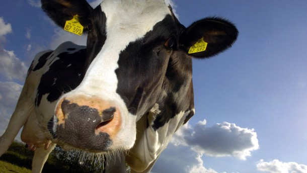 Weltgrößter Milchexporteur am Pranger