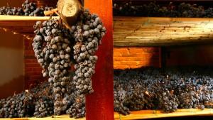 Tricks für den Weinanbau