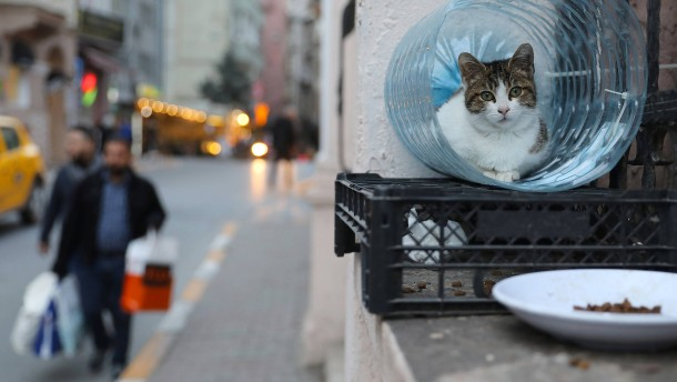Die Stadt der Katzen
