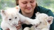 Prächtig entwickelt: Die zwei Löwenbabys im Magdeburger Zoo mit Tierpflegerin Julia Frost