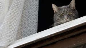 Anti-Allergie-Katze ethisch nicht vertretbar
