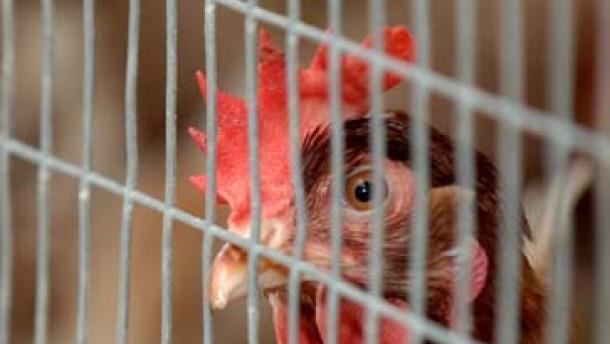 Die Vogelgrippe ist in Deutschland nicht angekommen