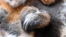 Pelze aus heimischer Jagd sehr gefragt