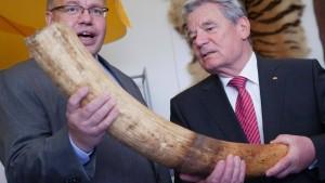 Interpol gegen den Elfenbeinhändler