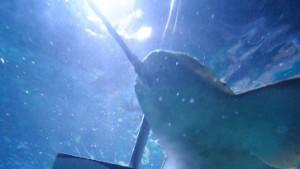 Der Pawlowsche Hai