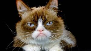 Der Mann, der Grumpy Cat zum Klassiker machte