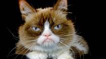 Garfield war nur montags schlecht gelaunt, Grumpy Cat ist es schon seit Jahren. Dafür lieben ihre Fans sie.