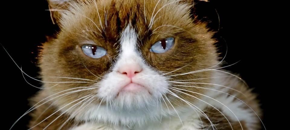 manager ben lashes machte grumpy cat zum klassiker