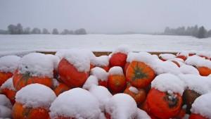 Erster Vorgeschmack auf den Winter