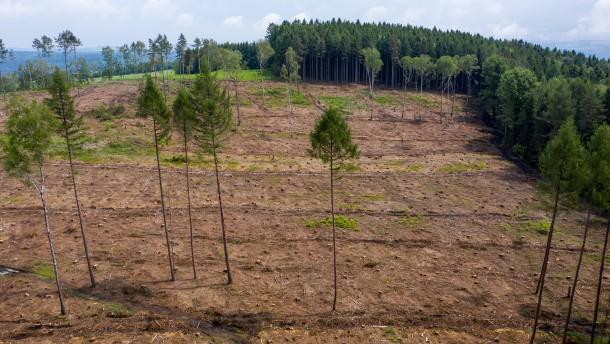Forstwirtschaft erleidet massive Gewinneinbrüche