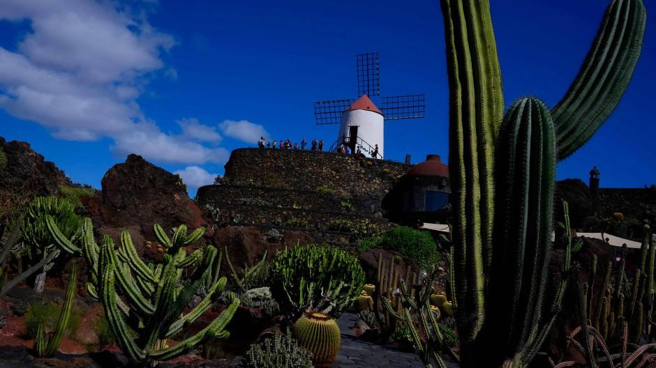 1991 legte der spanische Architekt Cesar Manrique den Kaktus-Garten auf Lanzarote an.