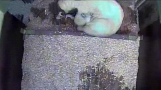Berliner Eisbär-Junge haben Überlebenschancen