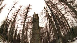 Ernste Sorge um Deutschlands Wälder