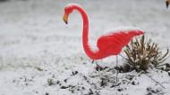 Paradiesvogel aus Plastik