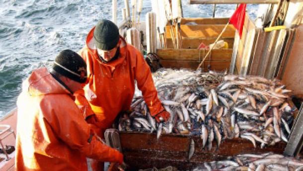 Die Hälfte der Fangflotte muss stillgelegt werden