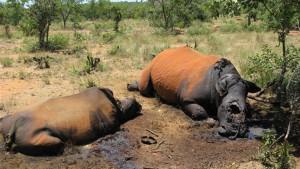 Südafrika will den Nashorn-Schwarzmarkt fluten