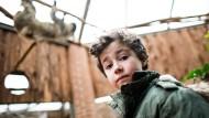 Der sechsjährige Mats steht am Donnerstag in Dortmund unter einer Kletteranlage für Faultiere. Nachdem ihm hier im Oktober Faultier Julius auf den Kopf gefallen war, hat er sich wieder in den Zoo getraut.
