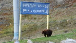 Die Bären von der Bobbahn