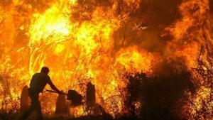 Erste Todesopfer durch Waldbrände