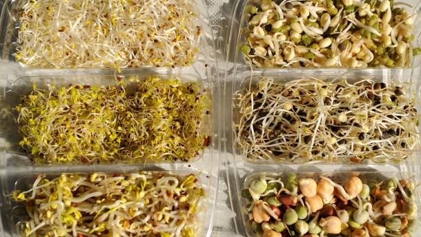 Importiertes Sprossen-Saatgut unter Verdacht
