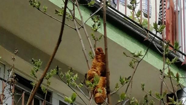 Gefährliches Tier im Baum erweist sich als Croissant