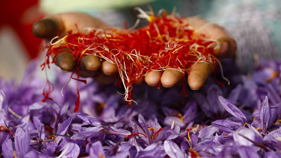 Safranernte in Indien: Nur wenige der teuren Fäden lassen sich aus einer Blüte gewinnen.