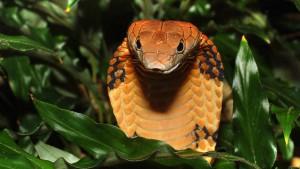 Zahl der bedrohten Tiere und Pflanzen steigt