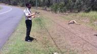 Unbekannter überfährt 17 Kängurus