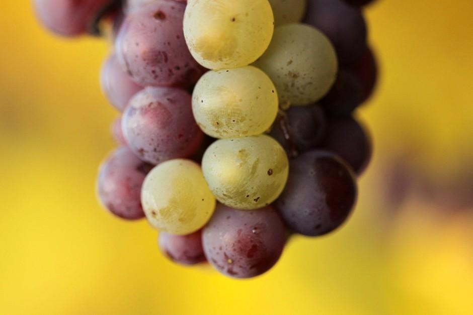 Im Weinbaugebiet Nahe entstehen Weine, die es durchaus mit französischen Spitzenweinen aufnehmen können.