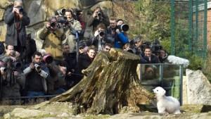 Zwei Zoos, ein Eisbär und viel Geld