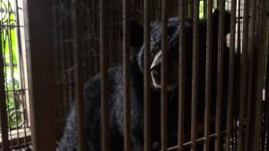 Schwarzbären töten zwei Männer in Alaska